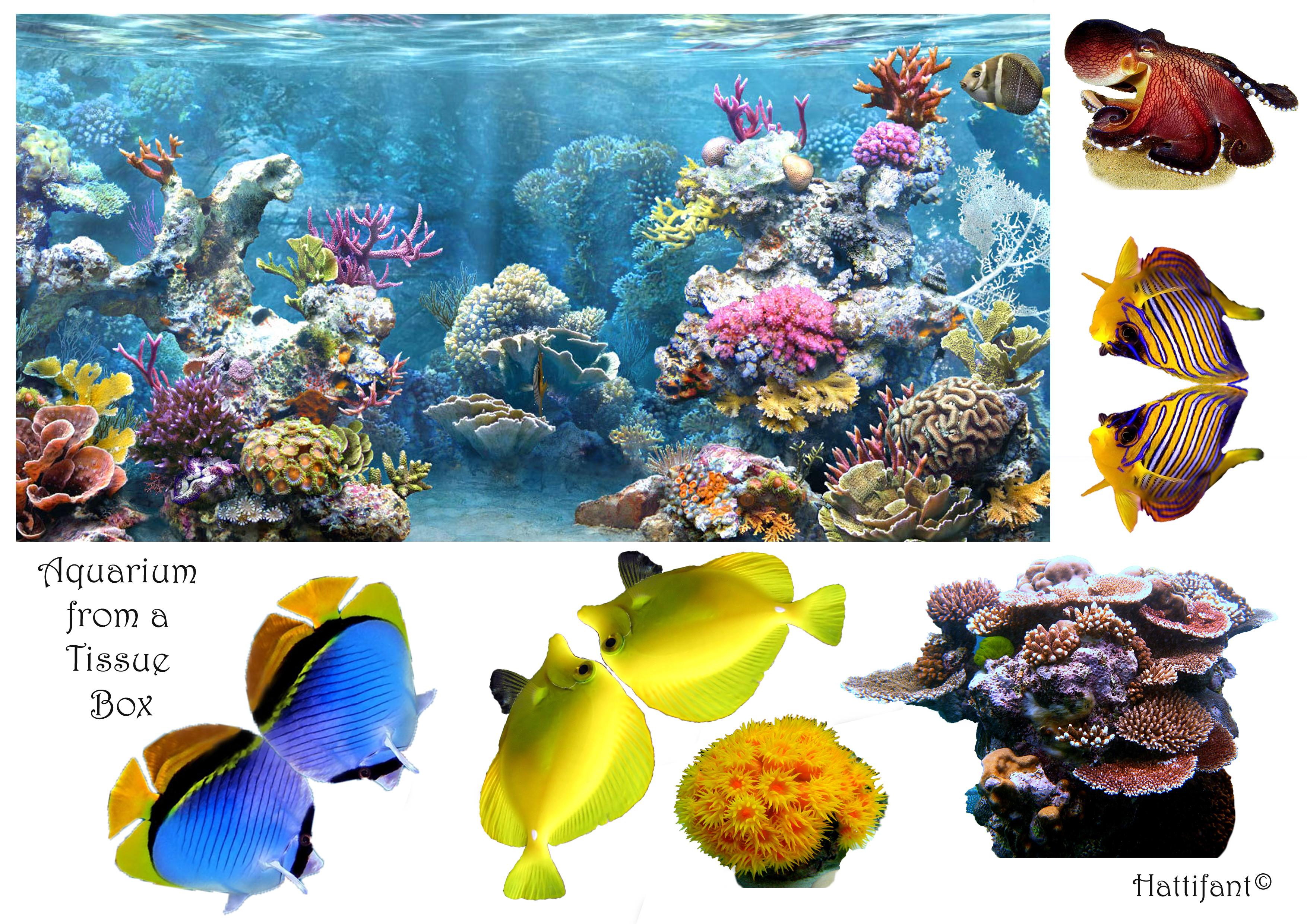 Tissue Box Aquarium