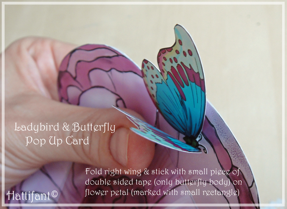 ButterflyOnFlower