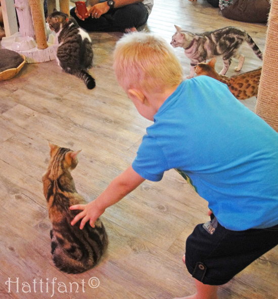 CaturdayCatCafe_cats_1