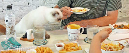 CaturdayCatCafe_food