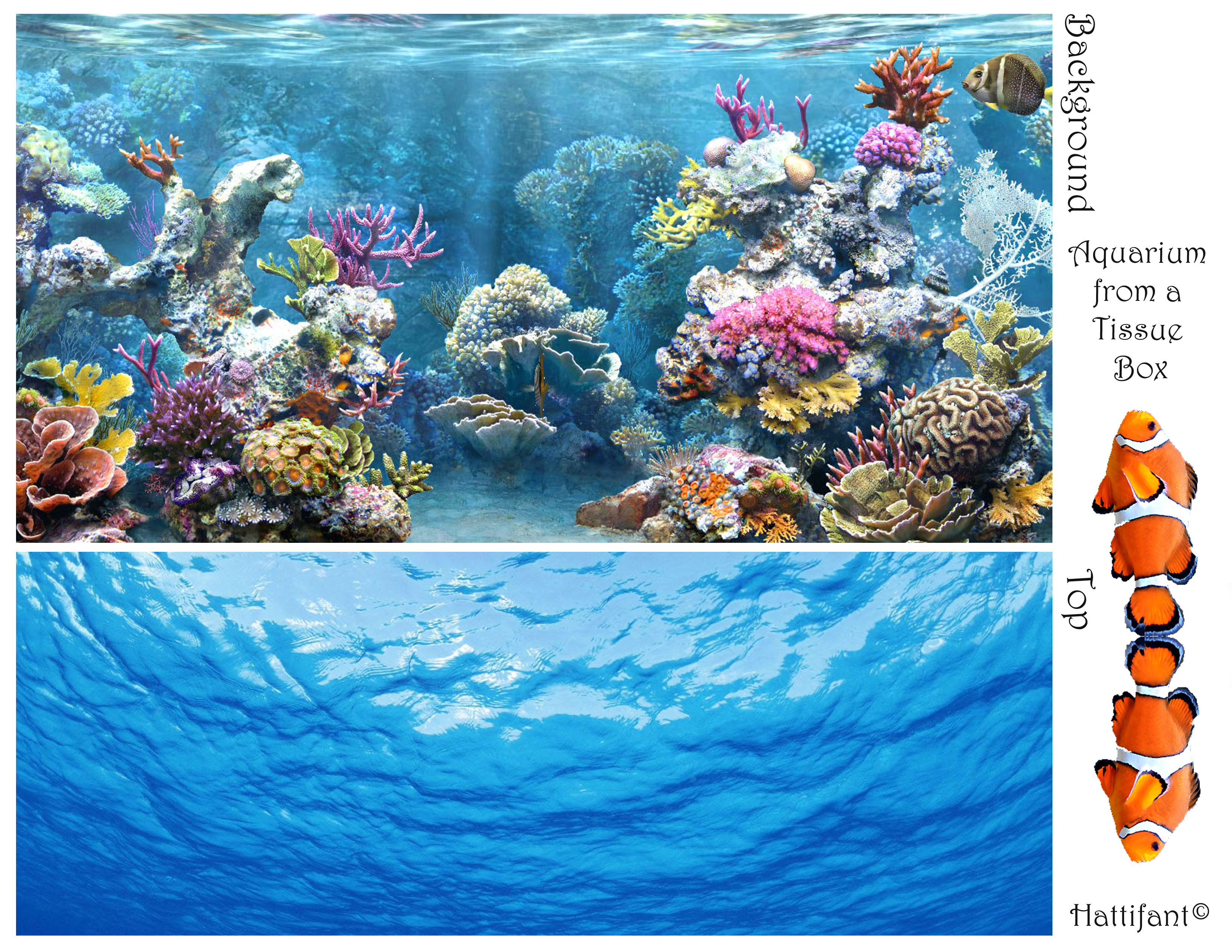 Tissue box aquarium what do you need sciox Image collections