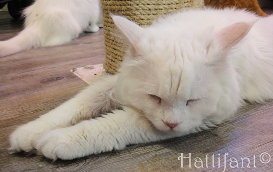 CaturdayCatCafe_cats_3