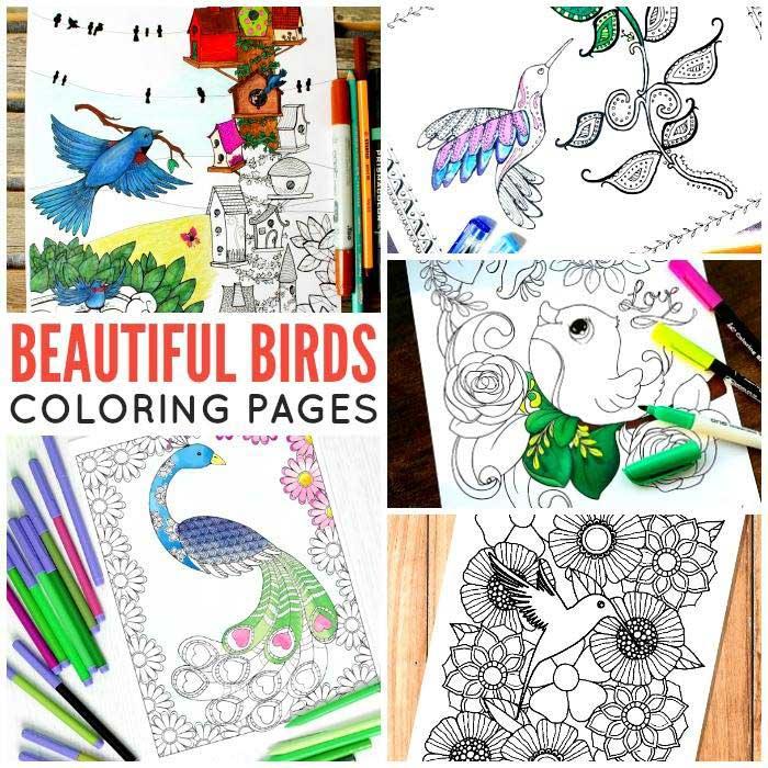 Hattifant S Bird Amp Flowers Coloring Page Hattifant